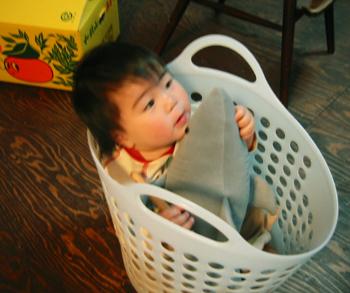 洗濯籠に入っちゃった